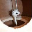 Ansamblu de joacă pentru pisici MINA L - bej