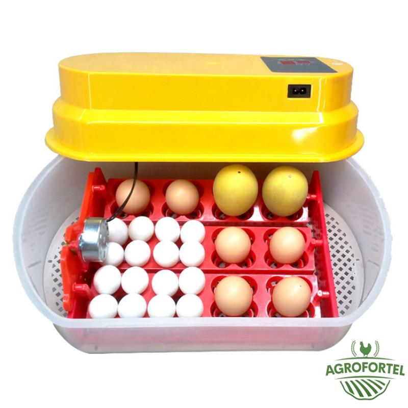 Cum să alegeți corect un incubator?